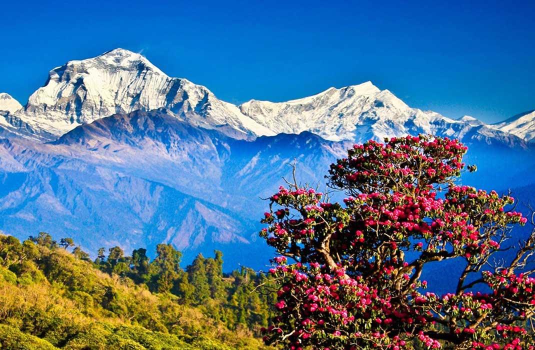 explore himalayan kingdom bhutan