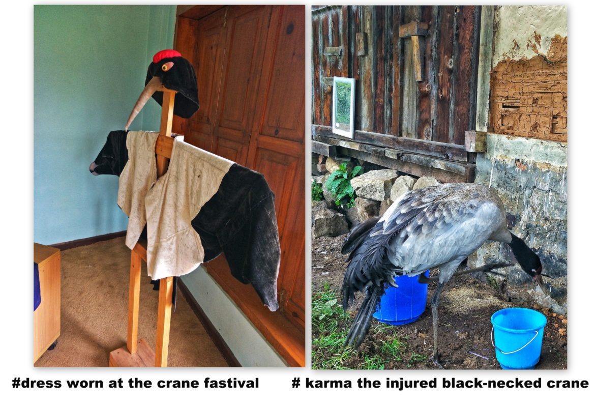 injured black-necked crane